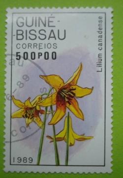 Imaginea #1 a 500 Pesos - Lilium canadense