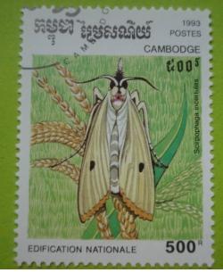 Image #1 of 500 Riels - scirpophaga incertulas