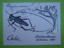 Image #1 of 6 Centavos - Pinthocoelium Columbinum