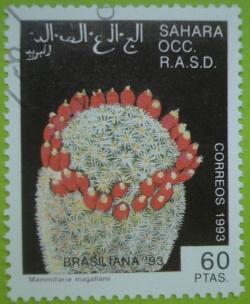 Image #1 of 60 Ptas. 1993 - Mammillaria magallanii