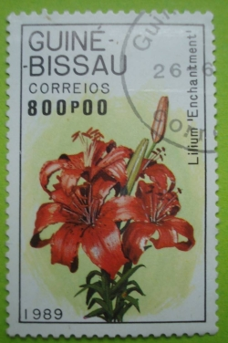 Imaginea #1 a 800 Pesos - Lilium enchantment