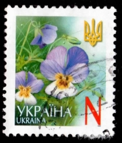 Image #1 of N 2006 - Pansy