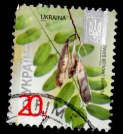 Image #1 of 20 Kopiyok 2012 - Flora - Trees - Robinia pseudoacacia