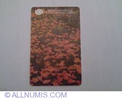 Imaginea #2 a Câmp cu flori