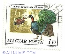 Imaginea #1 a 1 Ft 1977 - Afropavo congensis Chapin