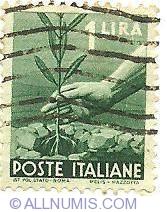 Image #1 of 1 Lira - Tree's