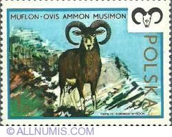 The mouflon