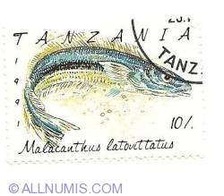 10/. 1991 - malacanthus latovittatus