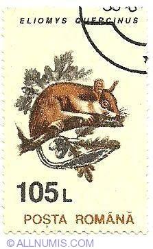 105 lei 1993 - Eliomys quercinus-Garden dormouse