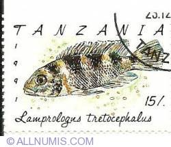 15/. 1991 - lamprologus tretocephalus