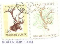 1.50 Ft 1963 - Cervus Elaphus