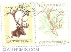 Image #1 of 1.50 Ft 1963 - Cervus Elaphus