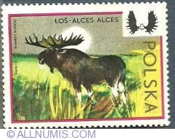 Image #1 of 1.50 z l- Eurasian elk