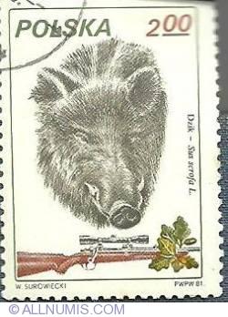 Image #1 of 2 zl-Wild boar-1981