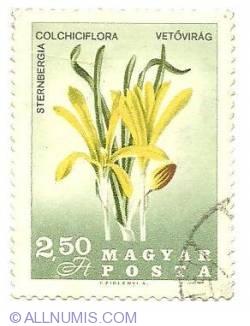 Imaginea #1 a 2.50 Ft - Sternbergia colchiciflora vetovirag