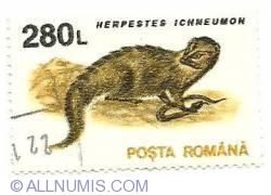 280 lei 1993 - Herpestes ichneumon - Egyptian Mongoose