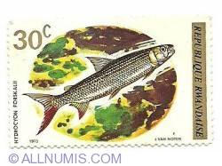 Image #1 of 30 C 1973 - Hydrocyon Forskalii
