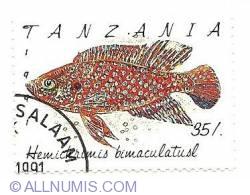 Imaginea #1 a 35 /. 1991 - hemictrunis bimaculatusl