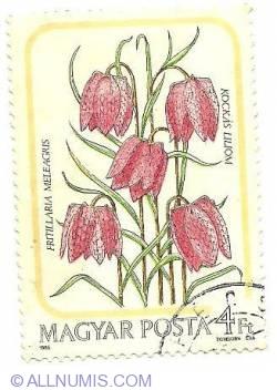 Imaginea #1 a 4 Ft 1985 - fritillaria meleagris kockas liliom