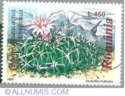 450 Lei - Echinofossulocactus lamellosus