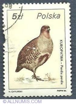 Imaginea #1 a 5 zl 1986 - The Grey Partridge