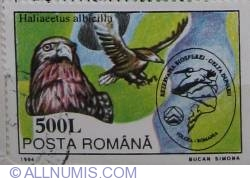 Imaginea #1 a 500 lei - Haliaeetus albieilla