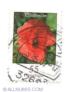 Image #1 of 55 - Klatschmohn