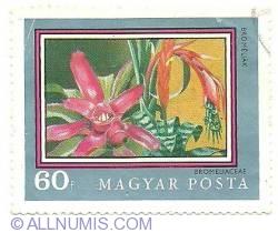 Imaginea #1 a 60 f - Bromeliaceae