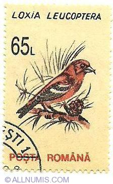 Imaginea #1 a 65 lei - Loxia Leucoptera