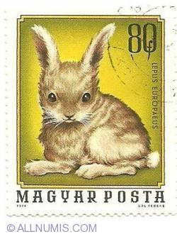 Image #1 of 80 f 1976 - Lepus Europaeus