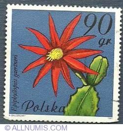 90 gr 1981 - Epiphyllopsis gaertneri (Cactusul de Paste)