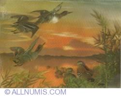 Image #1 of Ducks in flight