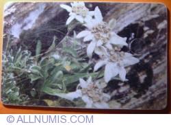 Imaginea #2 a Flori (6)