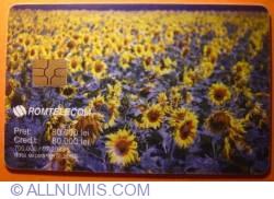 Imaginea #1 a Floarea-soarelui