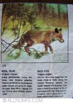 12 - Red Fox (Vulpes vulpes)