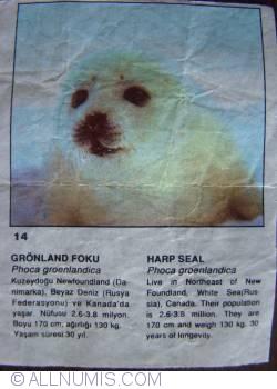 Image #1 of 14 - Harp Seal (Phoca groenlandica)