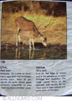 Image #1 of 18 - Chital (Axis axis)
