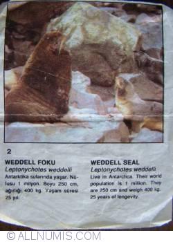 2 - Weddell seal (Leptonychotes weddellii)