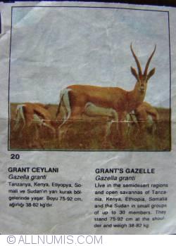 Image #1 of 20 - Grant's Gazelle (Gazella granti)