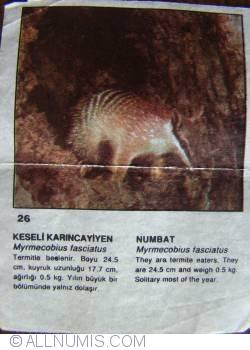 26 - Numbat (Myrmecobius fasciatus)