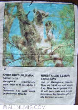 3 - Ring Tailed Lemur (Lemur catta)