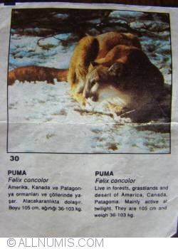 Image #1 of 30 - Puma (Felix concolor)