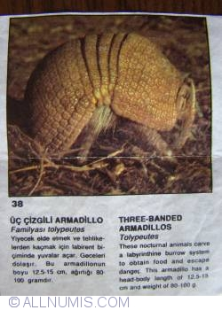 Image #1 of 38 - Three-Banded Armadillos (Tolypeutes tricinctus)