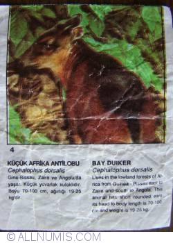 4 - Bay Duiker (Cephalophus dorsalis)