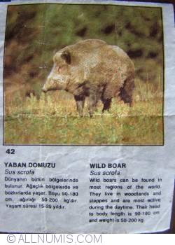 Image #1 of 42 - Wild Boar (Sus scrofa)