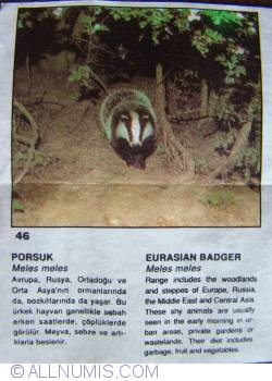 Image #1 of 46 - Eurasian Budger (Meles meles)