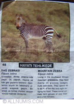 48 - Mountain Zebra (Equus zebra)
