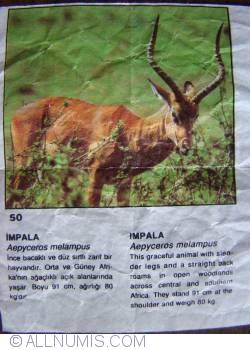 Image #1 of 50 - Impala (Aepyceros melampus)