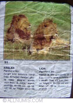 Image #1 of 51 - Lion (Panthera leo)