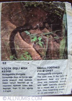 52 - Small-toothed palm civet (Arctogalidia trivirgata)